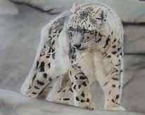 Tierwelt, Leopard, Schneeleopard, Katze