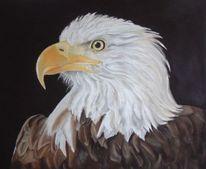 Tierportrait, Weißkopfseeadler, Pastellmalerei, Vogel