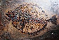 Steinbutt, Fisch, Fossilien, Turbot