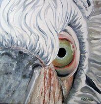 Vogel, Augen, Tiere, Pelikan