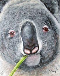 Koala, Ölmalerei, Gesicht, Portrait