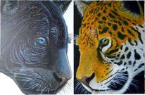 Portrait, Tiere, Leopard, Geschwister