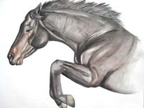 Auftrag, Pferde, Tierportrait, Aquarellmalerei