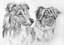 Bleistiftzeichnung, Portrait, Sheltie, Collie