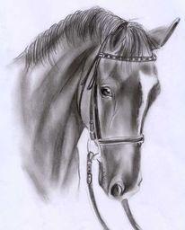 210 Bleistiftzeichnung Pferde Zeichnung Bilder Und Ideen