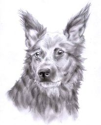 Rüde, Realismus, Bleistiftzeichnung, Hund