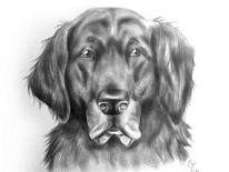 Hundeportrait, Tierportrait, Zeichnung, Hundezeichnung