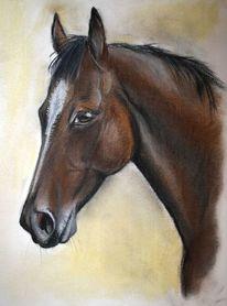 Pferde, Kreide, Pastellmalerei, Zeichnung