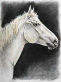 Pferde, Pastellmalerei, Zeichnung pferd, Portrait