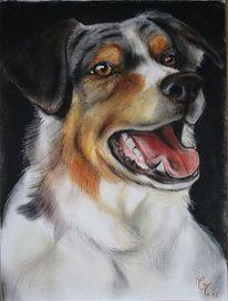 Hundezeichnung, Shepard, Hund zeichnung pastell, Pastellmalerei