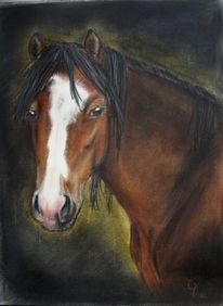 Pastellmalerei, Pferde, Pony, Pferdeportrait