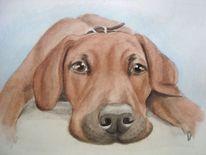 Hundeportrait, Aquarellmalerei, Tierportrait, Portrait