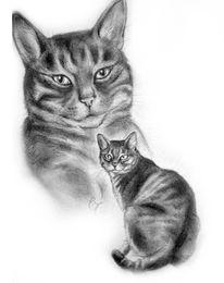 Katzenzeichnung, Bleistiftzeichnung, Tierportrait, Schwarz weiß