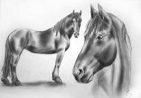 Pferd zeichnung bleistift, Pferdeportrait, Zeichnung, Tierportrait