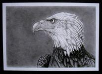 Natur, Bleistiftzeichnung, Vogel, Tiere