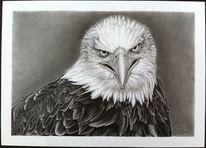 Vogel, Natur, Zeichnung, Adler