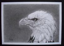 Vogel, Natur, Bleistiftzeichnung, Tiere