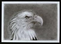 Adler, Bleistiftzeichnung, Tiere, Zeichnung