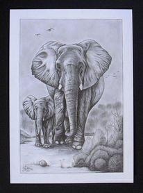 Natur, Zeichnung, Bleistiftzeichnung, Tiere
