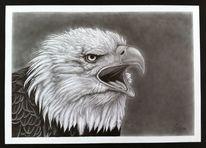 Vogel, Natur, Tiere, Bleistiftzeichnung
