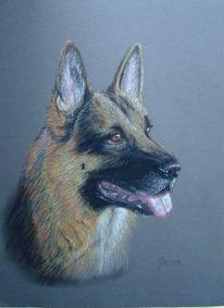 Pastellmalerei, Schäferhund, Tiere, Zeichnung