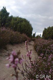Fotografie, Natur, Lichtbild, Landschaft