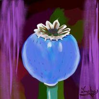 Irisch, Mohn, Malerei, Blumen