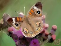 Achtsamkeit, Schmetterling, Malerei, Digitale malerei