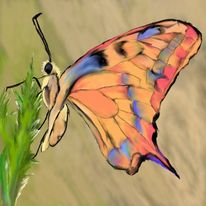 Digitale kunst, Schmetterling