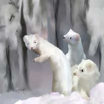 Tiere, Hermeline, Wald, Winter