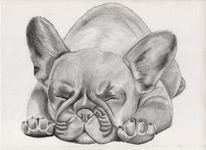 Tiere, Bleistiftzeichnung, Bulldogge, Welpe