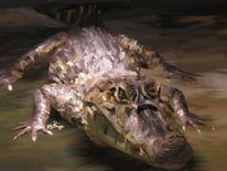 Wild, Life7, Tiere, Krokodil