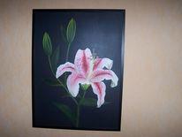 Lilie, Weiß, Zart, Blumen
