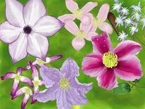 Natur, Clematis, Blumen, Digitale kunst