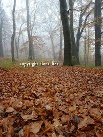 Fotografie, Natur, Licht, Baum