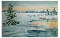 Winter, Schnee, Kalt, Tanne