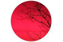 Natur, Farben, Baum, Surreal