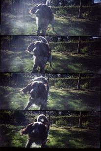 Hund, Lomography, Supersampler, Bellen