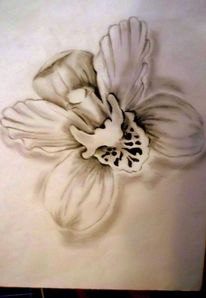 Bleistiftzeichnung, Zeichnungen