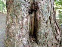 Baum, Platz, Höhle, Baumraum