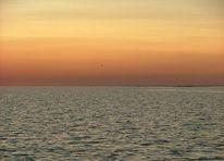 Sonnenuntergang, Frieden, Meer, Vogel