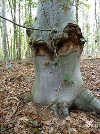 Waldboden, Stille, Leben, Herz