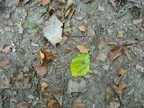Blätter, Natur, Waldboden, Fotografie
