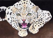 Raubtier, Katze, Leopard, Natur