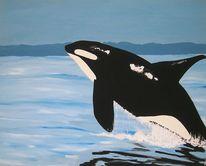 Orcinus orca, Meerestiere, Schwertwal, Wasser