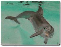 Meer, Fisch, Delfin, Wal
