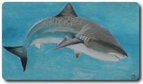 Unterwasser, Hai, Meer, Raubfisch