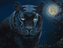 Puma, Mond, Katze, Wildkatze