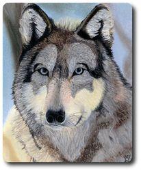 Wolf, Hund, Natur, Tiere