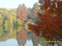 Bunt, Park, Herbst, Fotografie
